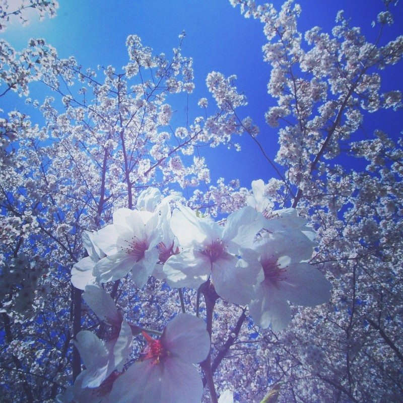 2016/04/10 @難波宮跡公園, prhythm
